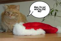 Christmas Orange Tabby Cat Humor