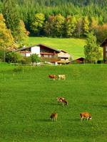Swiss Countryside