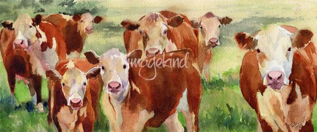 Stunning Cow Watercolor Painting Reproductions For Sale On Fine