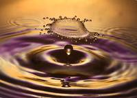 Flying Purple-Gold Splash