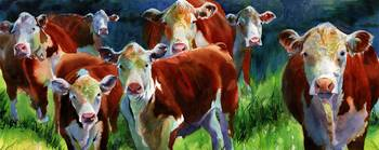 Curious Cows II