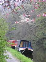 Canal Boats in Spring