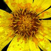 Flower Power Yellow