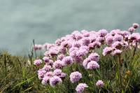 Thrift On The Cliff.