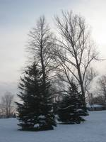 Snowy trees in the park.