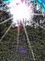 Enhanced Luminescence & Lens Flare Photo