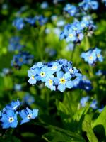 Mini Blue Flowers