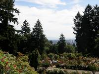 Rose Garden, Portland, Oregon