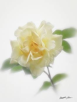 Creamy Yellow Rose by Christopher Johnson