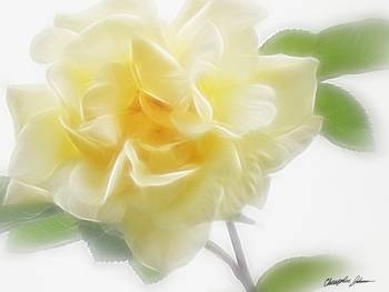 Creamy Yellow Rose 2 by Christopher Johnson