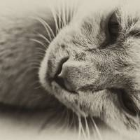 Pensive Cat Art Prints & Posters by George . . .