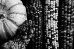 "Black and White Corn by James ""BO"" Insogna"