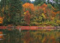 Lacamas Lake Autumn Reflections
