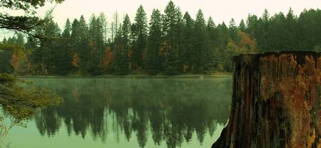 Lacamas Lake And The Old Stump