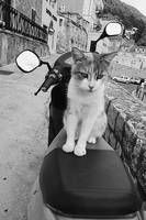 Kitty Vespa