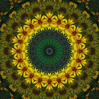 Large Yellow Wildflower Kaleidoscope Art 4