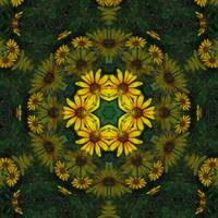 Large Yellow Wildflower Kaleidoscope Art 10