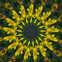 Large Yellow Wildflower Kaleidoscope Art 12