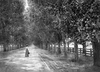 Woman Walking on Brokaw Road, San Jose • c1890 by WorldWide Archive