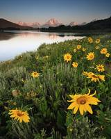 Oxbow Bend Sunrise