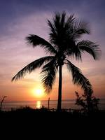 Palm and Sunset