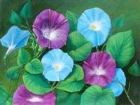 Morning Glory Oil - EBSQ