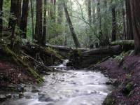 Redwood Creek in Muir Woods, CA