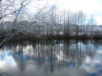 Winter Scene at the Sammamish Slough