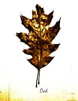 Oak Leaf No. 3