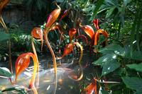 Swans - Chihuly Exhibit, St Louis Botanical Garden