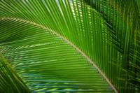 Palm Frond for Karolyn
