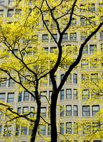 Yellow Tree and Bulding