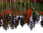 Manchaug Mill Pond Reflection