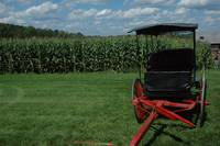 buggy shot in corn field in woodstock , New York