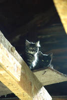 Couple of Catskill Barn Cats