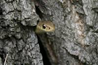 Snake in the Wood