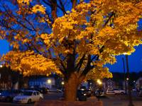 Autumn Twilight by Sara Fraser