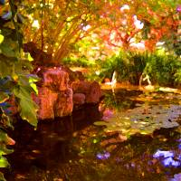 """Hidden Pond"" by AmyVangsgard"
