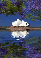 Sydney Opera House with jacaranda reflections