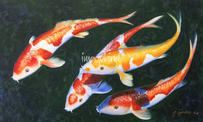Oil painting fish best painting 2018 for Koi art nature