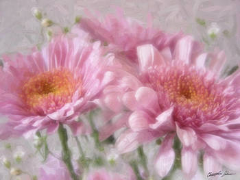 Pink Chrysanthemums 2 by Christopher Johnson