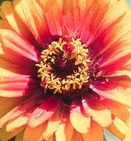 Bright Flower in shades of yellow and red