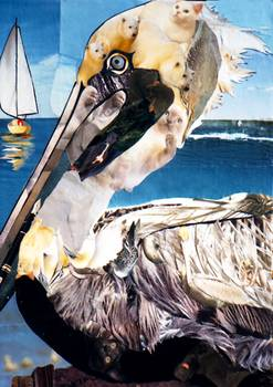 Pelican by artist Marjorie Pesek. Giclee print, art prints, collage
