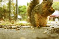 Berkeley Squirrel II