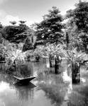 Pond of Hortpark, black/white