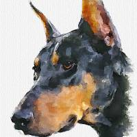 """Doberman Pinscher"" by piker77"