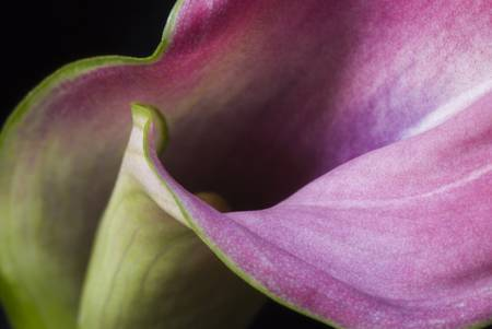 20 Spectacular Macro Photography Examples
