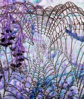Negative Of A Spider Web