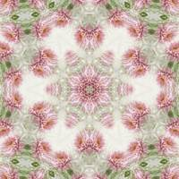 Pink Chrysanthemums Kaleidoscope Art 5