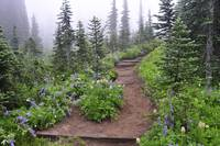Alpine trail with wildflowers